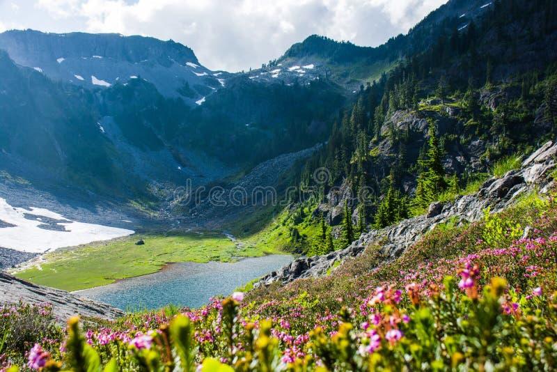 A charneca azul floresce com as montanhas e o Austin Pass Lake foto de stock