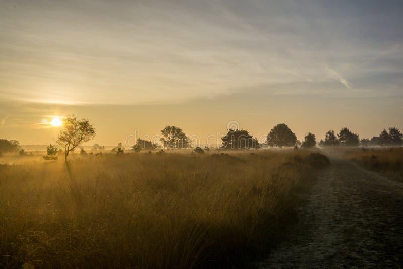 Charneca do nascer do sol fotografia de stock