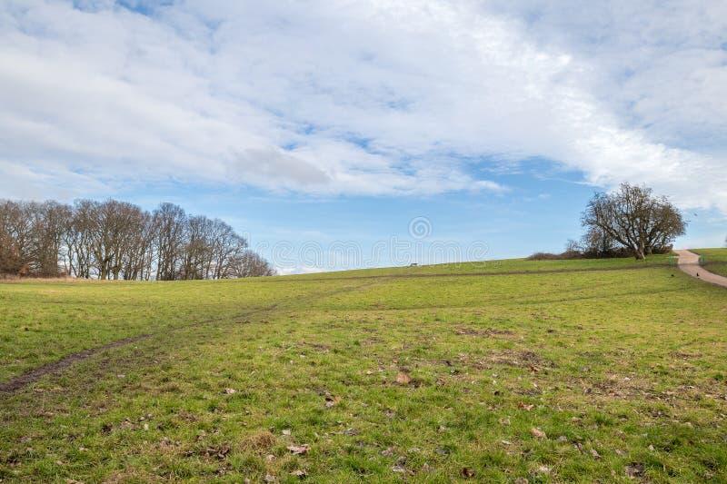 Charneca em um parque sob o céu azul completamente das nuvens fotografia de stock