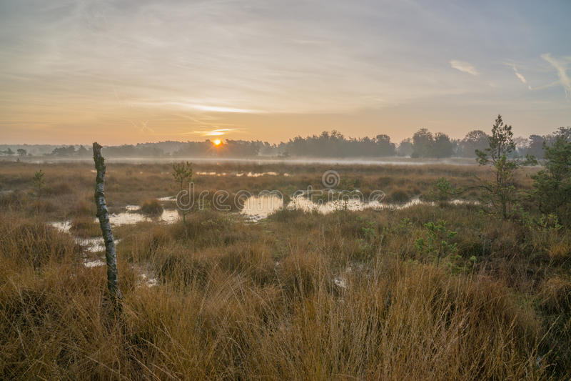 Charneca no nascer do sol fotografia de stock royalty free