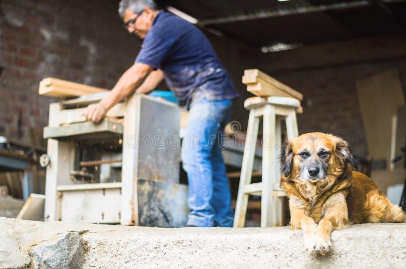 Charpentier professionnel faisant des rénovations dans son atelier à la maison avec son petit chien photo stock