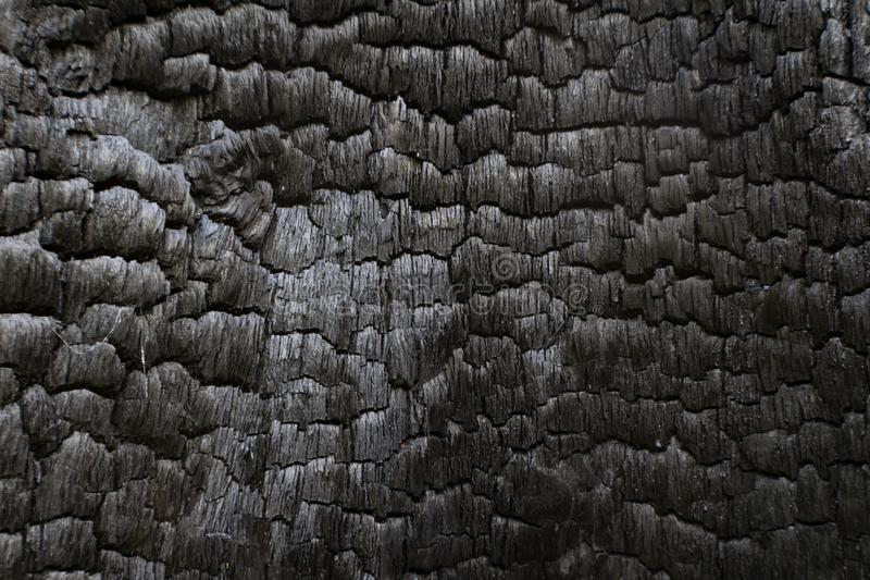 Charred black wood log interior burned in a forest fire. Horizontal aspect royalty free stock photography