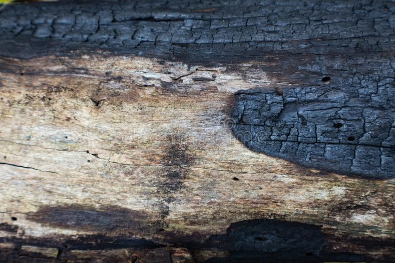 Charred log detail background blackened by a forest fire. Horizontal aspect stock image