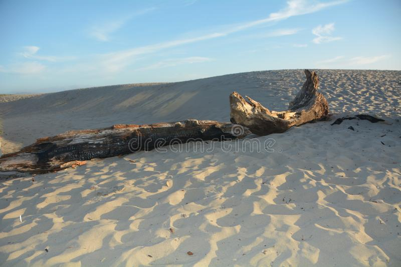 Charred Log on sand dune at Pacific City, Oregon royalty free stock photos