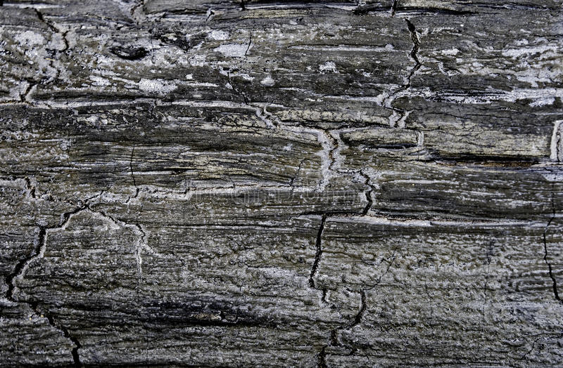 Charred tree as background stock images