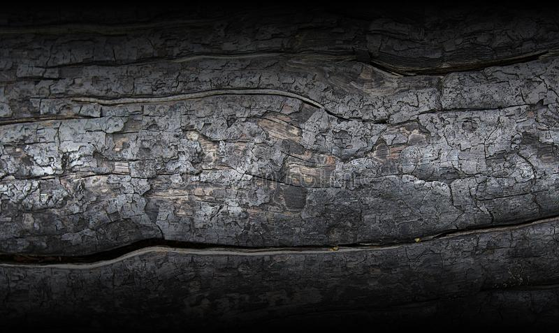 Charred trunk of a pine tree. Charred trunk of a pine tree as a background stock images