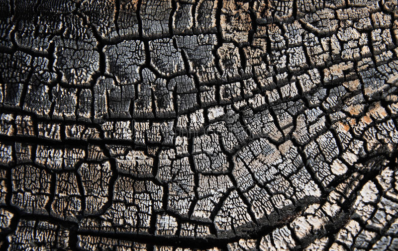Charred wood. Structure of the charred tree royalty free stock photo