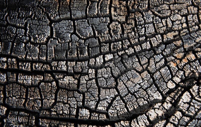 Charred wood royalty free stock photo