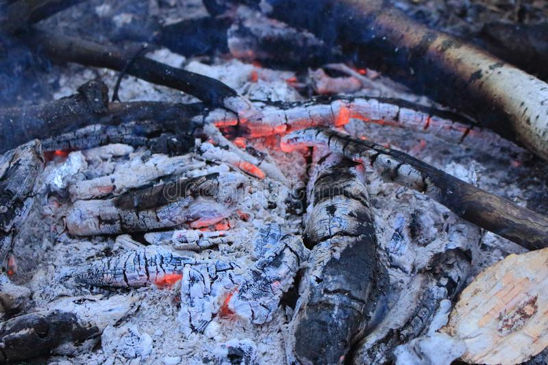 Charred wood with charcoal and grey ash in bonfire closeup. Coal and ash texture. stock photography