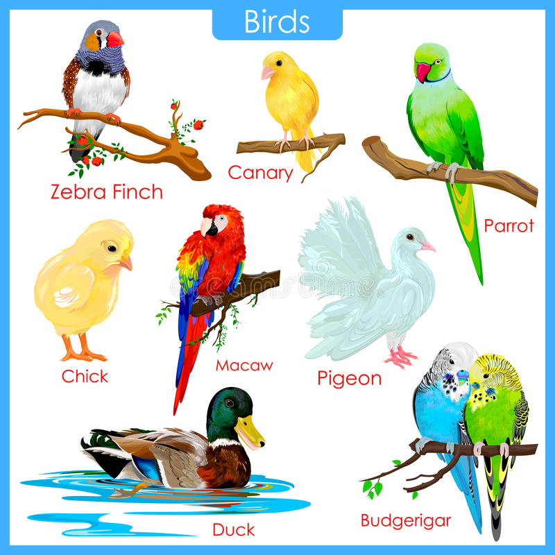 Free Chart Of Colorful Birds Stock Images - 55756464
