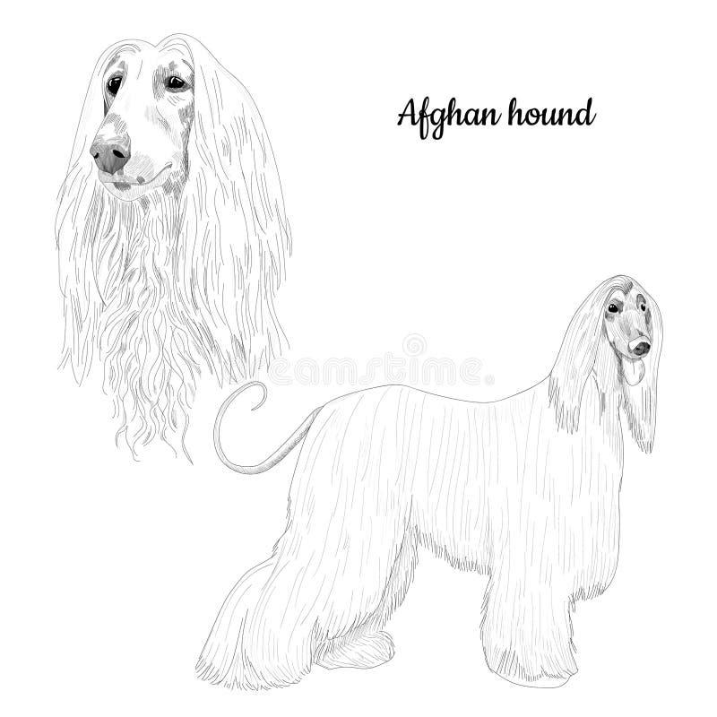 Charta afgańskiego nakreślenie odizolowywający na białym tle ilustracji