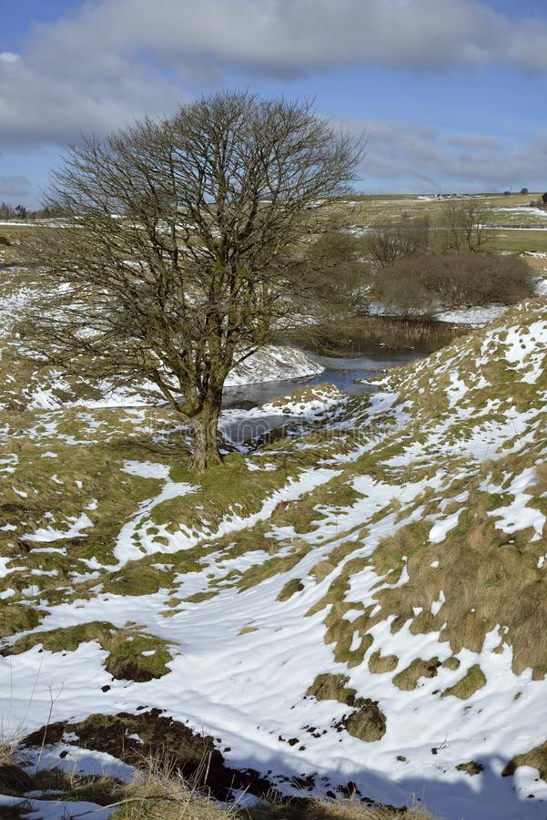 Charterhouse Lead Mines. Lone Tree at Charterhouse Lead Mines in Snow, Mendip Hills, Somerset royalty free stock photography