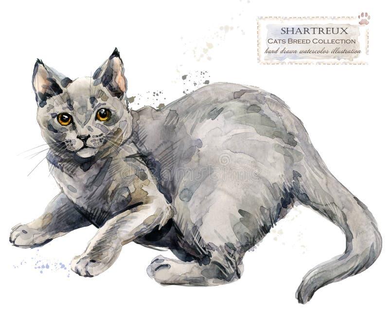 Chartreuse Katze Haupthaustier Zucht der Katzen-Reihe Nettes Kätzchen vektor abbildung