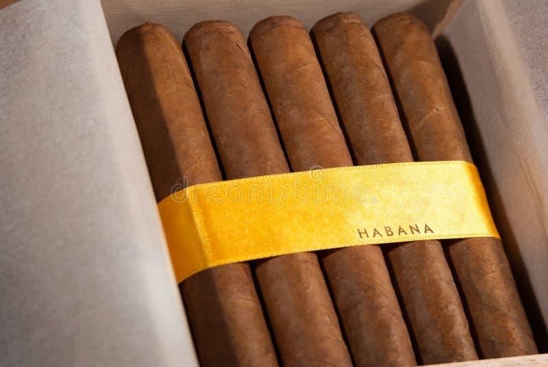 Charutos cubanos na caixa imagens de stock