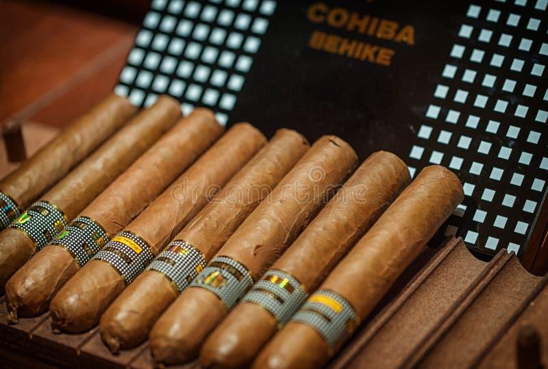 Charutos cubanos na caixa fotografia de stock royalty free