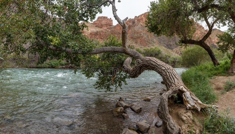Charyn River in the Charyn Canyon. stock image