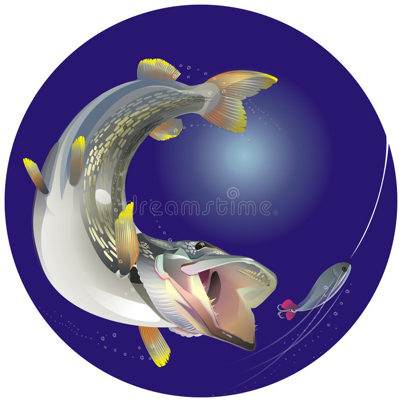 Download Chase stock vector. Image of hook, down, rush, water, entice - 5650567