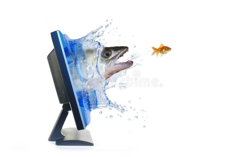 In chase for fish royalty free stock images