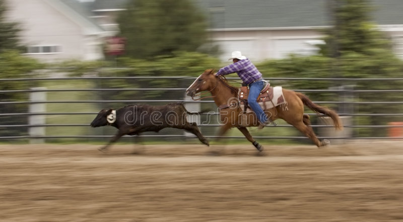 Chasing Down the Cow Panning and Motion Blur. Cowboy races after calf at rodeo event - panning and motion blur stock photography