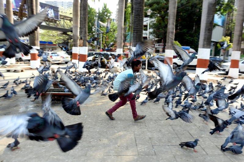Chasing pigeons, Bandra Talao, Mumbai India stock afbeeldingen