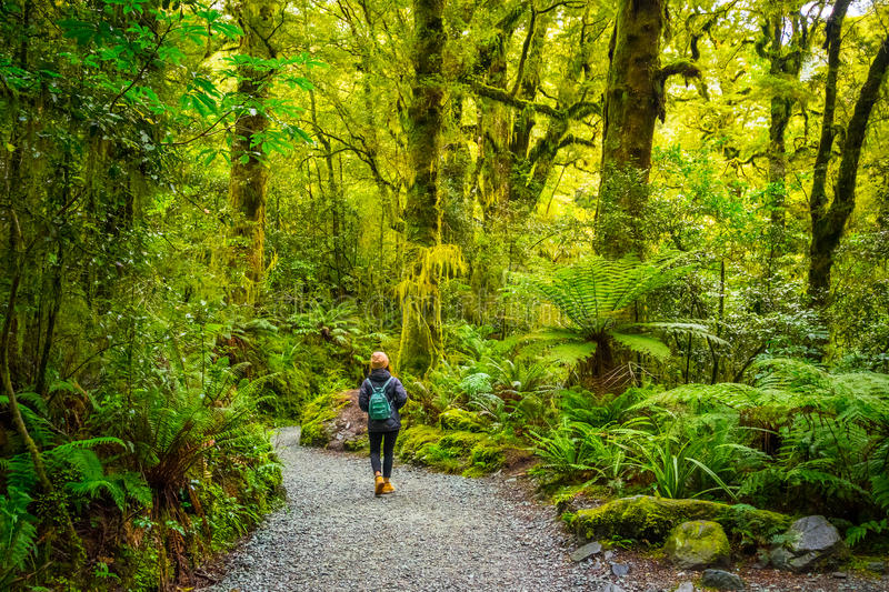 Track at the Chasm Fall, Fiordland National Park, Milford Sound, New Zealand royalty free stock photos