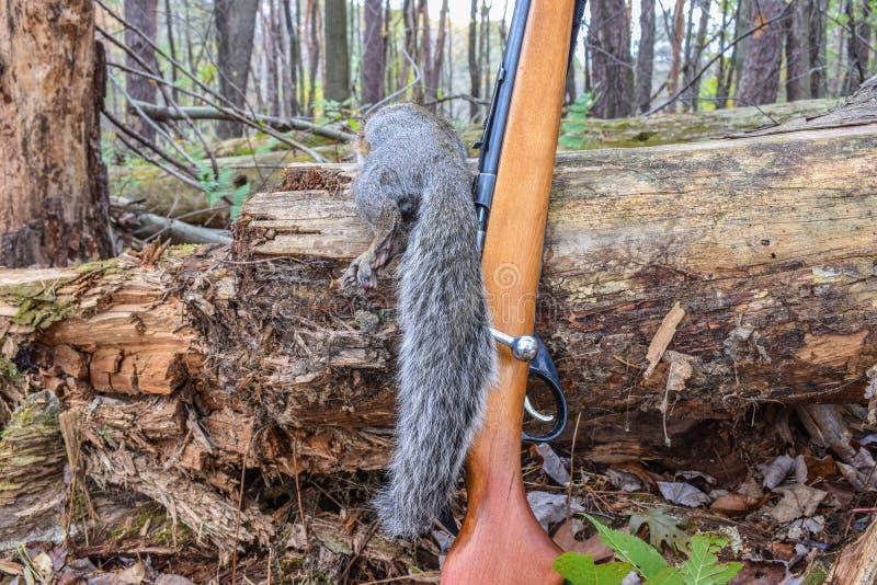 Chasse d'écureuil image libre de droits