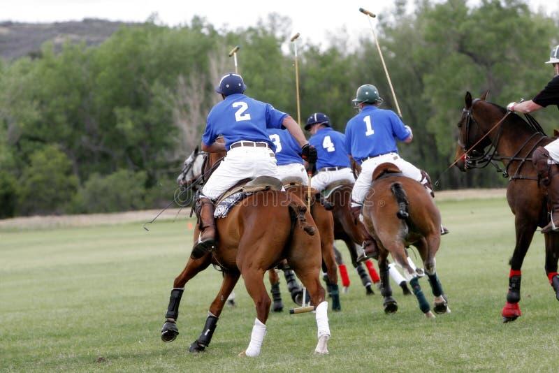Chasse d'équipe de polo photo stock