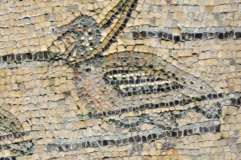 Chasse de canard photographie stock libre de droits