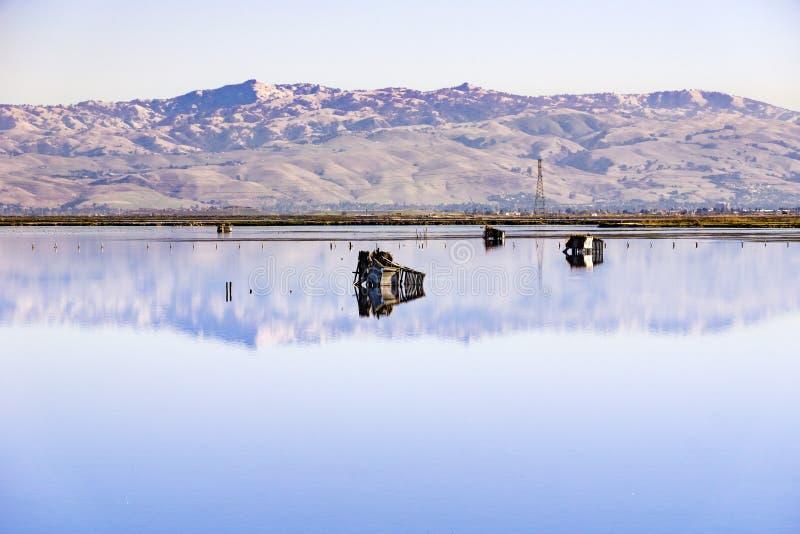 Chasse des abat-jour, traînée de baie de Moffett, Mountain View, San Francisco Bay du sud, la Californie photo libre de droits