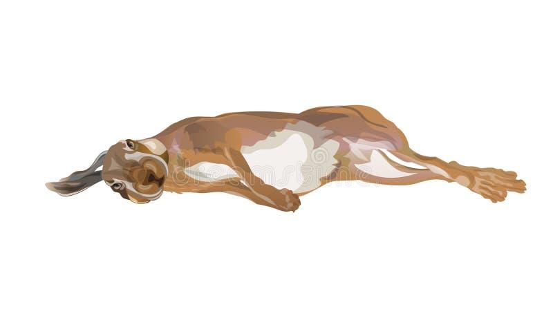 Chasse du vecteur de lièvres illustration stock