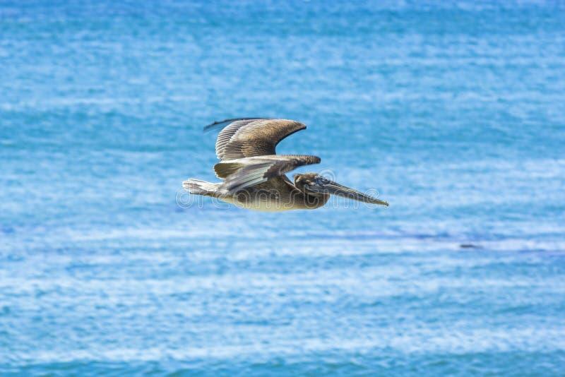 Chasse et vol de Cormorant images libres de droits