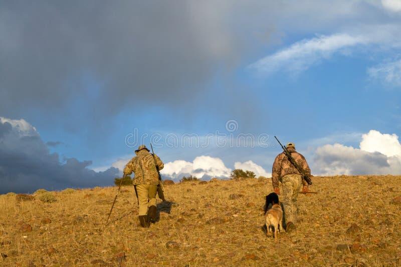 Chasseurs et chiens américains de coyote dans le lever de soleil aride images stock