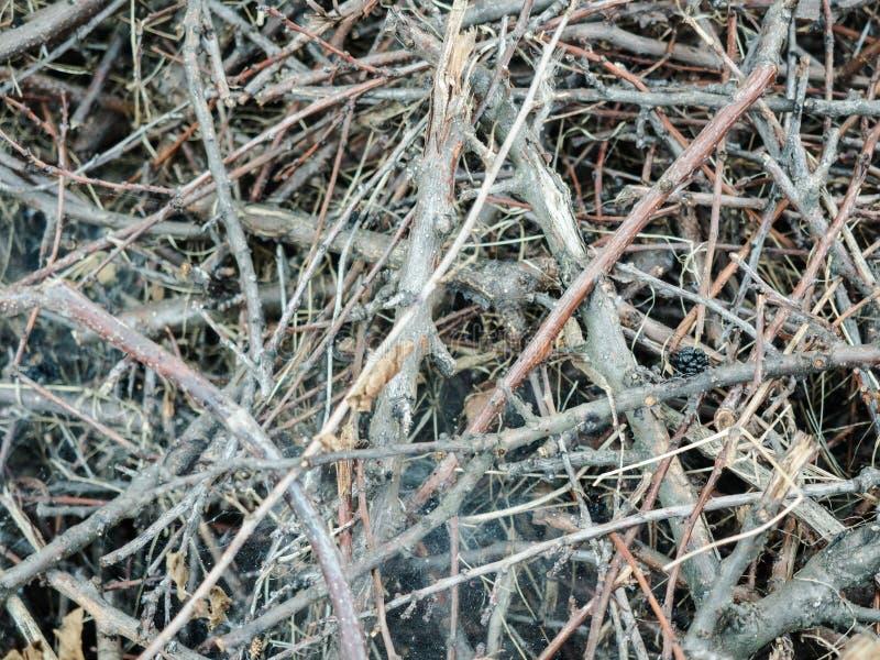 Chaszcze, gałąź wypiętrzać w rozsypisku Horyzontalna fotografia widok od wierzchołka Kopiasty suszy gałąź Tło z fotografia stock