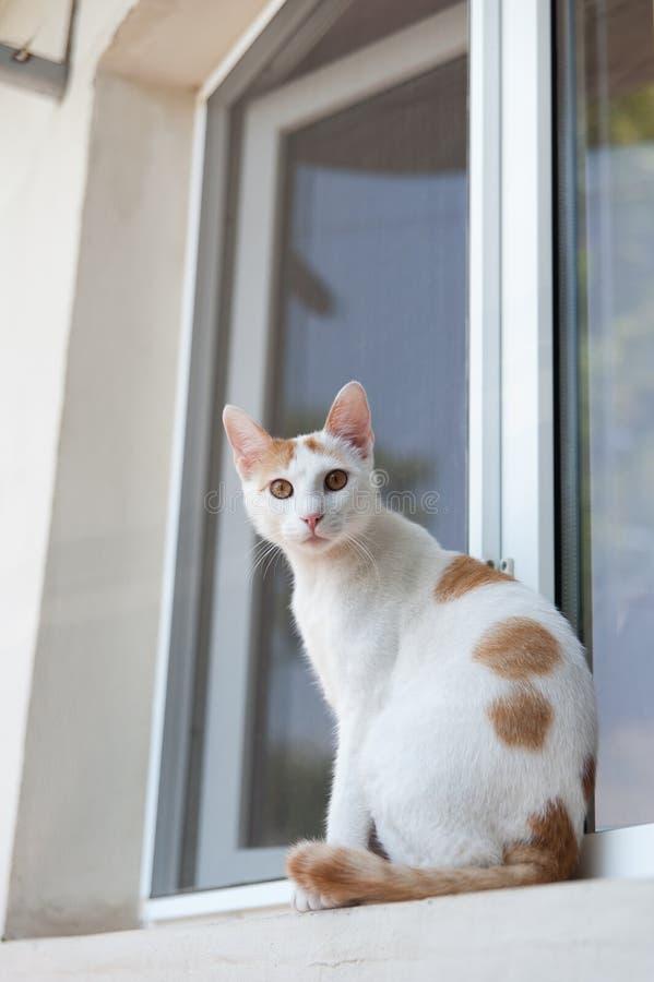 Chat à la fenêtre photographie stock libre de droits