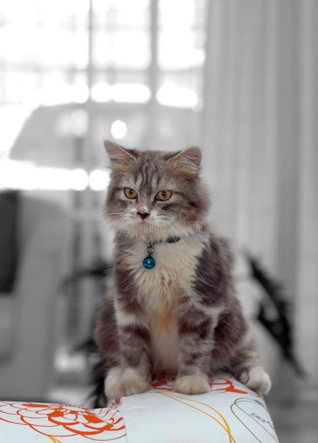 Chat à la maison photo libre de droits