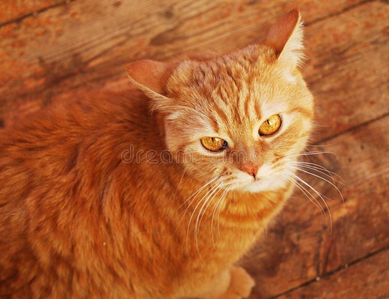 Chat à la maison image stock