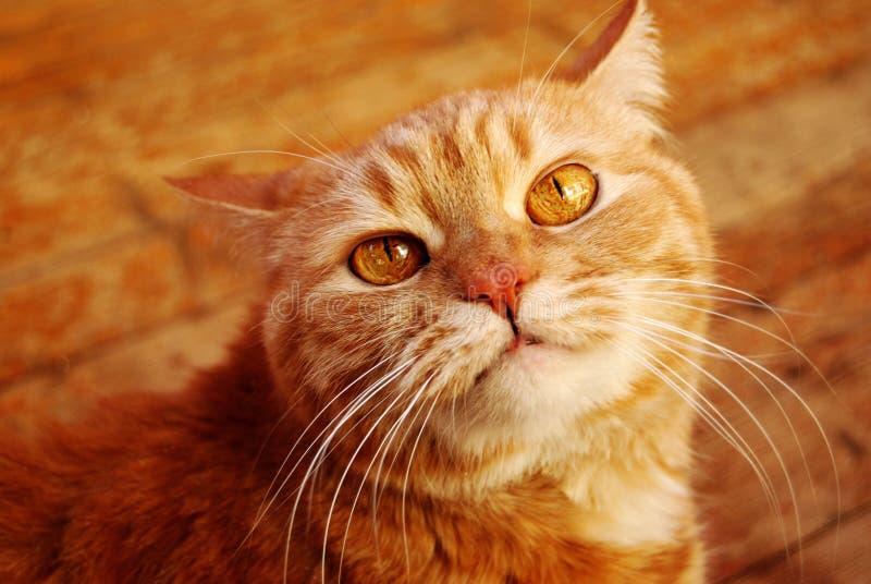 Chat à la maison photos stock