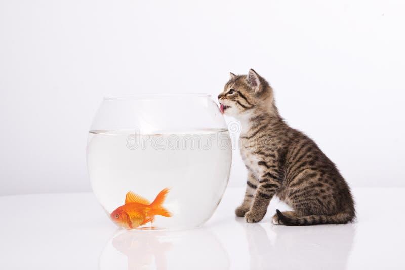 Chat à la maison et un poisson d'or image libre de droits