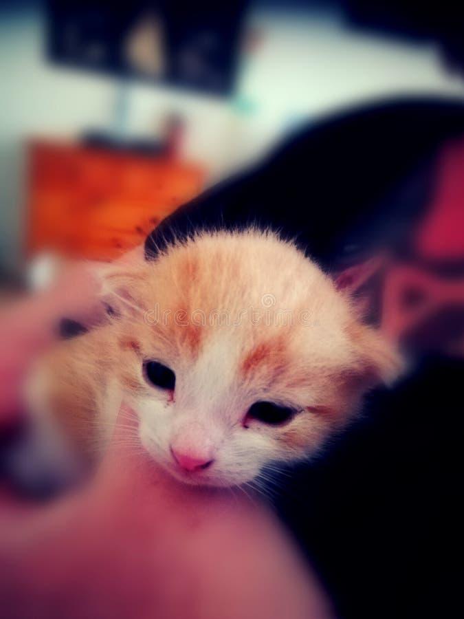 chat âgé de 2 semaines images libres de droits