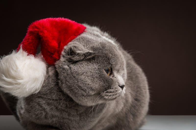 Chat écossais gris habillé avec le chapeau de Santa image libre de droits
