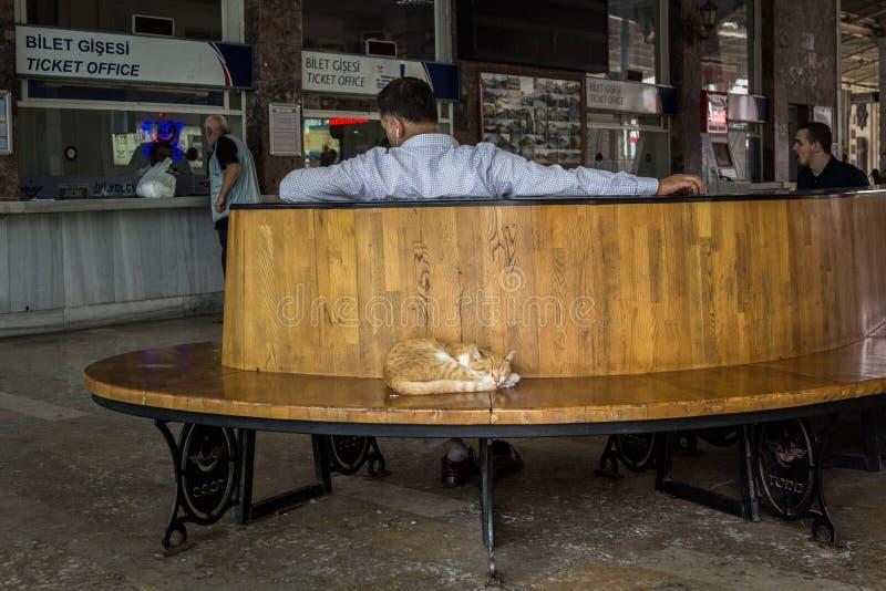 Chat égaré de gingembre dormant dans la salle d'attente de la station de train de Sirkeci à Istanbul tandis qu'un homme d'affaire image stock