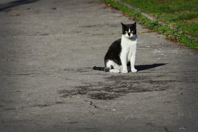 Chat égaré se reposant sur la rue photo stock