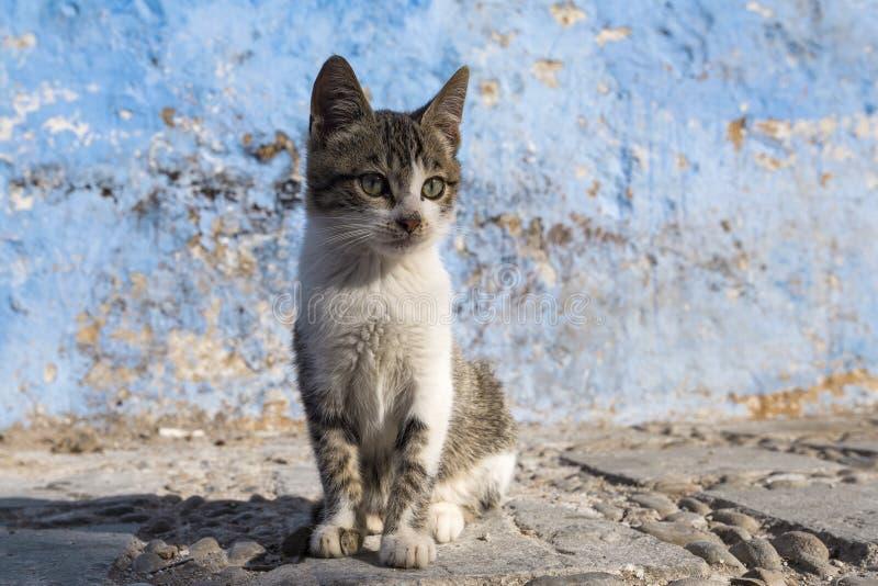 Chat égaré sur les rues dans Chefchaouen, Maroc photo stock