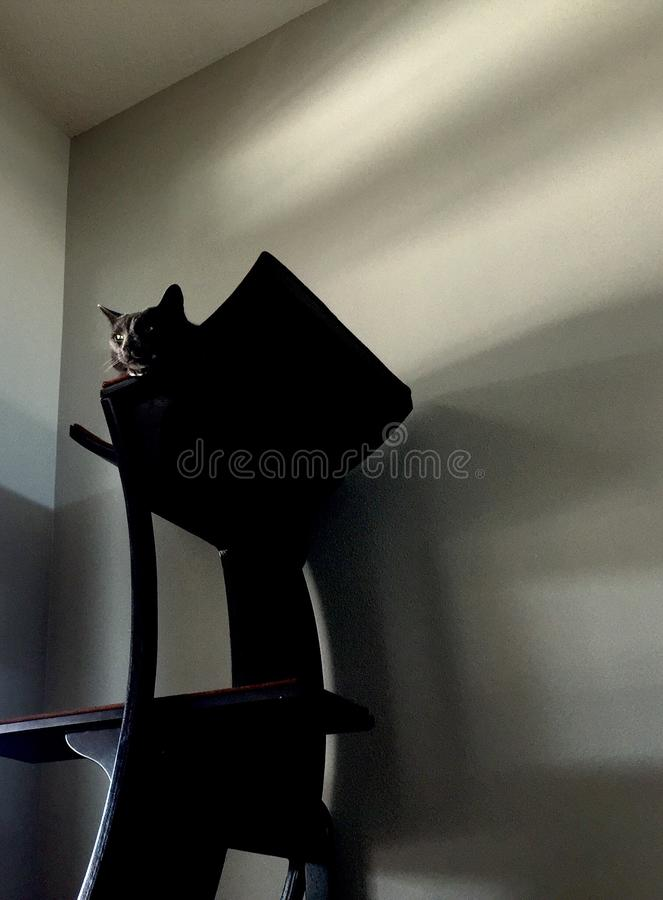 Chat été perché sur l'arbre de chat image libre de droits