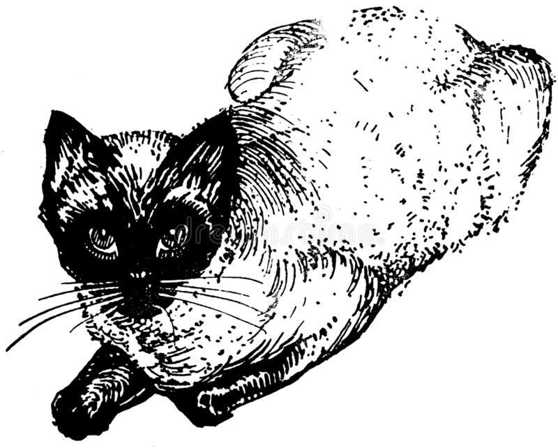 Chat-004-ap Free Public Domain Cc0 Image