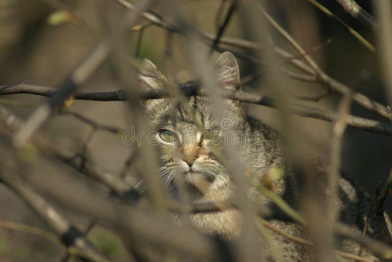 Download Chat image stock. Image du ambush, chat, animal, prédateur - 742699