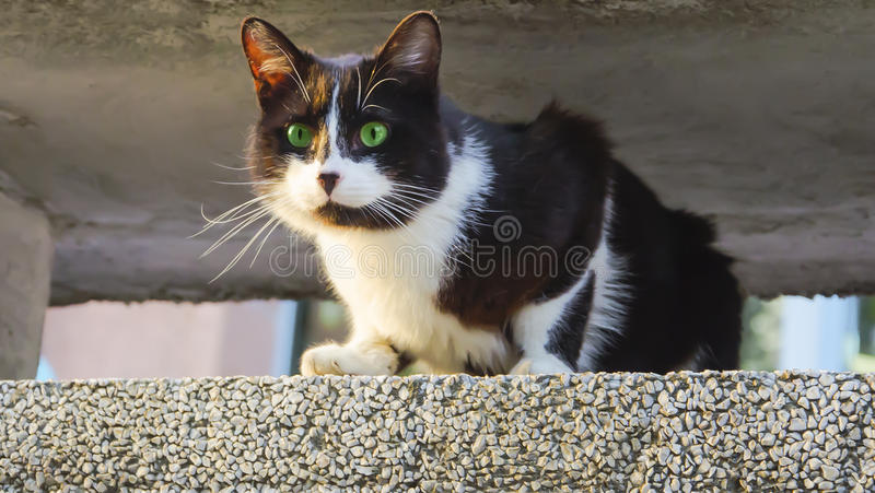 Chat image stock