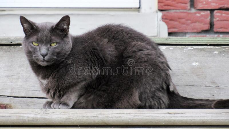 Chat 149 royalty free stock photos