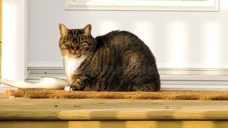 Chat 061 royalty free stock photos