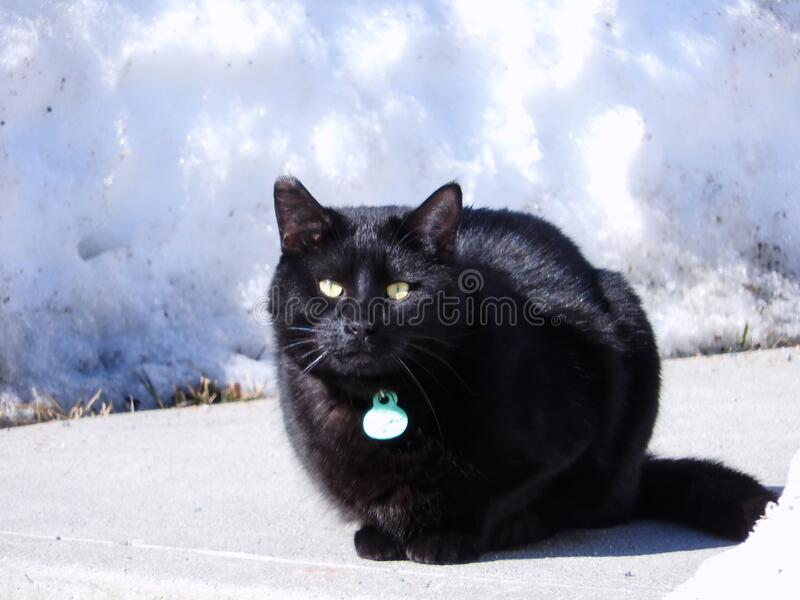 Chat 829 royalty free stock image
